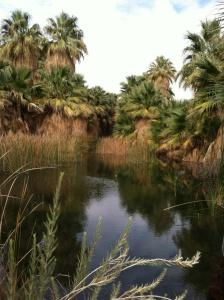 Thousand Palms Preserve