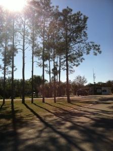 Florida Sunshine at it's finest!